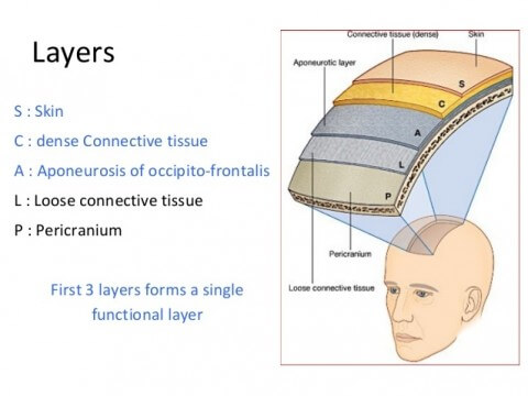 Scalp Layers